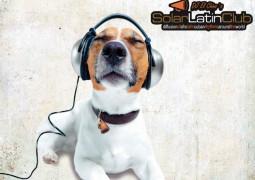 DJ El Chino's Solar Latin Club Vol. 3 / Salsa Mundial